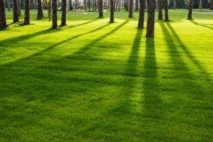 Gartenpflege Grünpflege